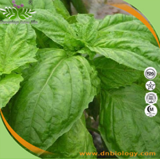 Basil Herb Extract
