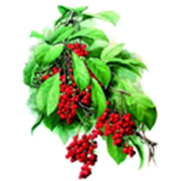 Schisandra Chinensis extract