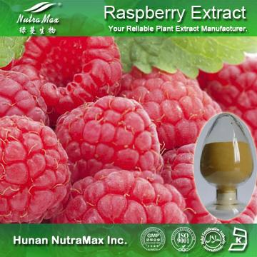 100% Natural Raspberry Extract Raspberry Ketone 4%