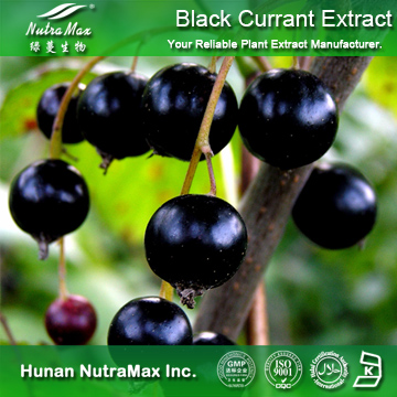 5%~25% Anthocyanidin Black Currant Fruit Extract: