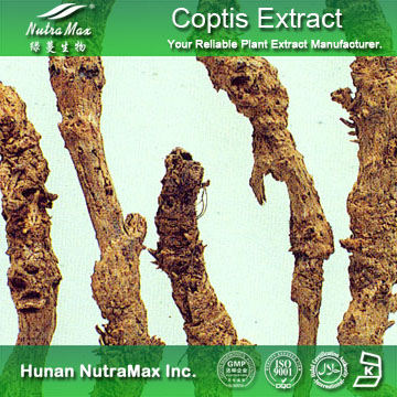 Nutramax Supplier - Coptis Root Extract PowderHPLC 10%-98%(Berberine Hydrochloride)