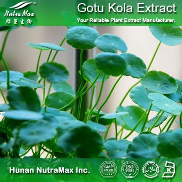 100%Nutramax Supplier -  Gotu Kola ExtractMadecassoside 90%-95%