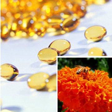 Supercritical Marigold Oleoresin