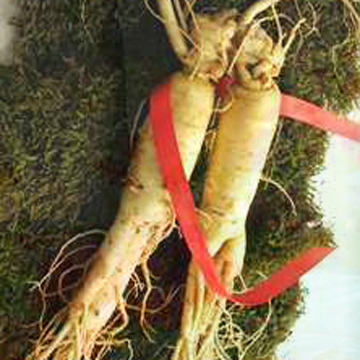 Panax Ginseng Root Extract