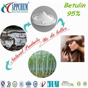 Betulin powder