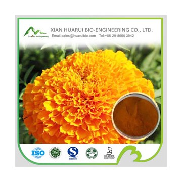 5%-90% marigold extract powder