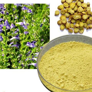 Scutellaria Baicalensis extract Baicalin 85% 90% HPLC