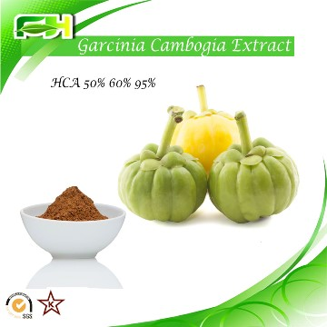 Factory Supply Garcinia Cambogia Extract