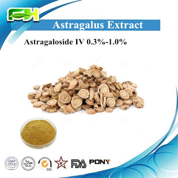 Natural Astragalus Extract Astragaloside IV 0.3%-1.%