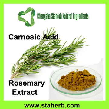 Manufacturer Supplier Carnosic Acid, Ursolic Acid, Rosmarinic Acid Rosemary Extract