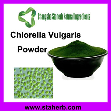 100% pure natural Chlorella Powder/Chlorella extract Powder/taiwan chlorella