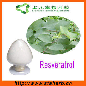 natural Giant Knotweed Extract resveratrol powder resveratrol capsules