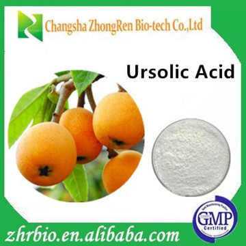 Professional Manufacturer Supply Loquat Leaf Extract 25% 80% 90% 98%Ursolic acid Powder