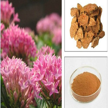 100% Natural Rhodiola Rosea Extract 3% Rosavins&1% Salidroside