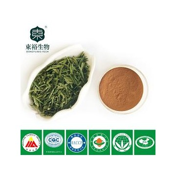 green tea extract 98% EGCG50%