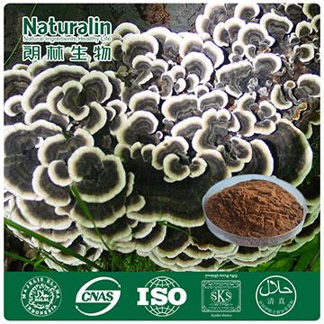 Coriolus Mushroom Extract/Yun Zhi Extract