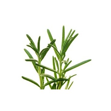 HAIRUI Natural Rosemary Essential Oil