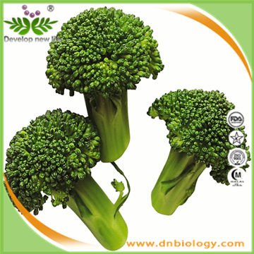 Broccoli P.E.