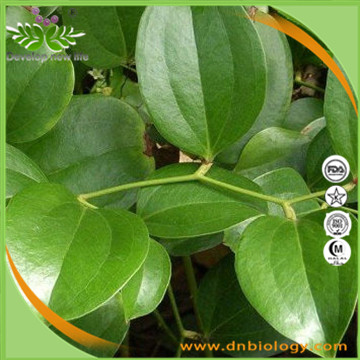 Chinaroot Greenbrier Extract
