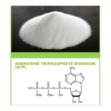 Adenosine Triphosphate Disodium  (ATP)