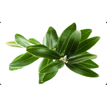 Hydroxy-tyrosol 10%-40% HPLC Olive Leaf Extract CAS#10597-60-1