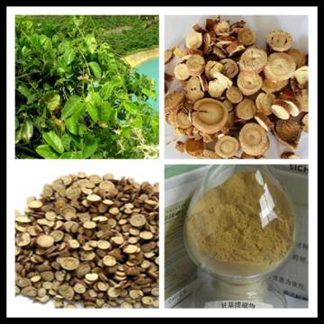 Glycyrrhizin 10% Licorice Extract GMP factory