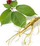 Asian Ginseng Stem and Leaf P.E.
