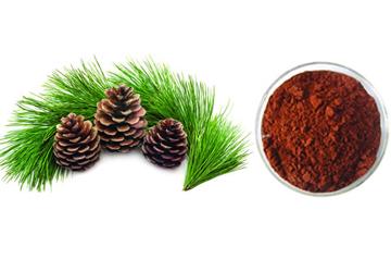 Pine Extract