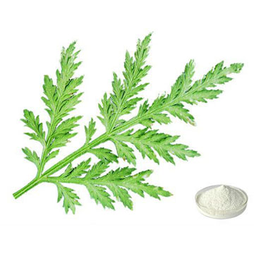 Annual Artemisia Extract