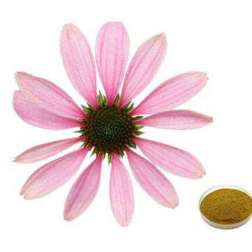 Echinacea Extract Powder