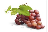 Grape Skin Extract 30% Proanthocyanidin; 30% Polyphenols