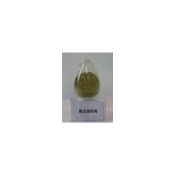 Belladonna Extract