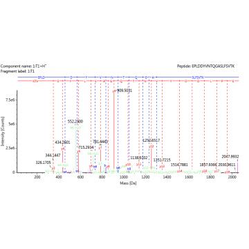 N-Terminal/C-Terminal sequencing