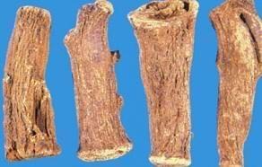 Elecampane Extract