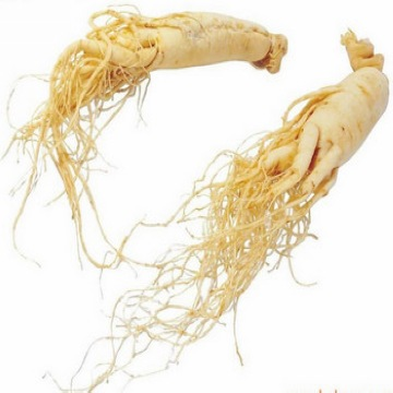American Ginseng Root. P.E.