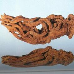 Angelica Sinensis Extract